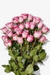 Amazon Prime Members: 2-Dozen Whole Trade Roses